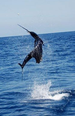 Deep sea fishing charters tampa fl fun for the thrill for Tampa deep sea fishing